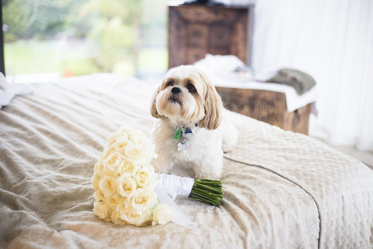Real Weddings | Vinka Design | Real Brides Wearing Vinka Gowns | Kristen and Ben - dog on bed with bouquet