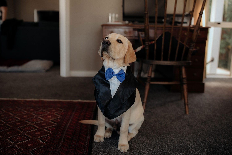 Vinka Design Features Real Weddings - labrador in tux